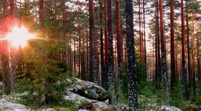 Bli med på tur i vinterskogen sammen med Skogsliv og Ordføreren