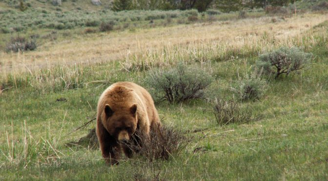 Er du redd bjørn?